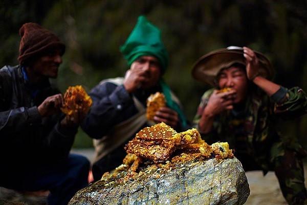 Bộ tộc có cách săn mật ong nguy hiểm nhất thế giới