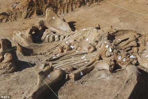 Phát hiện bộ xương khổng lồ của sinh vật thời kỷ băng hà