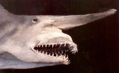 """10 """"sát thủ đại dương"""" kỳ quái nhất - Ảnh 10"""