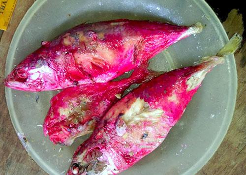 Nguyên nhân khiến cá kho chuyển màu đỏ bất thường tại Hà Tĩnh