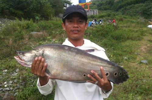 Câu được cá thác lác nặng 7 kg ở Quảng Nam