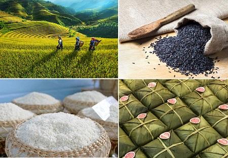 Gạo nếp nương Điện Biên – hạt ngọc thực tạo nên hương vị bánh chưng ngon nhất