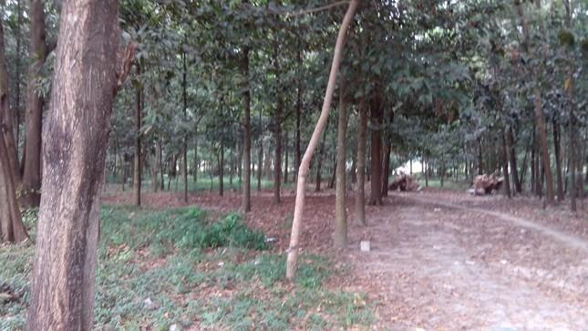 """Con đường dẫn vào """"chợ tình"""" trong rừng tràm"""