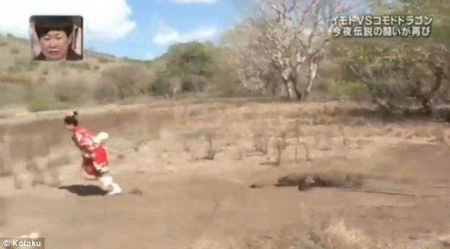 Cô gái xả thân làm mồi nhử rồng ăn thịt Komodo 2
