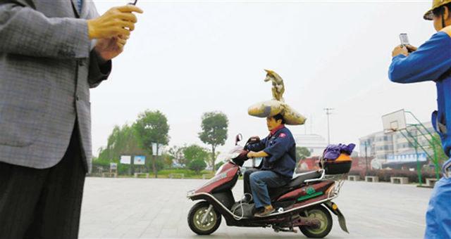 Người đàn ông đội thú cưng lên đầu điều khiển xe gây sốt