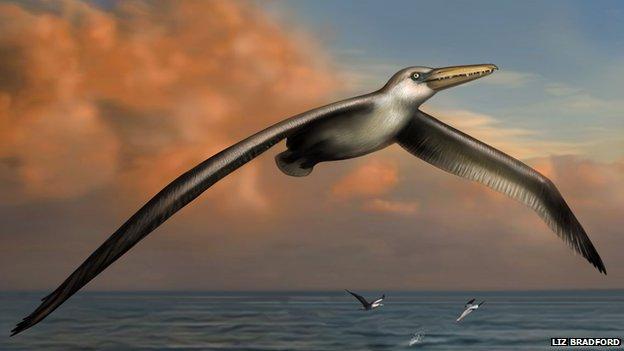 Hé lộ về loài chim khổng lồ 25 triệu năm về trước