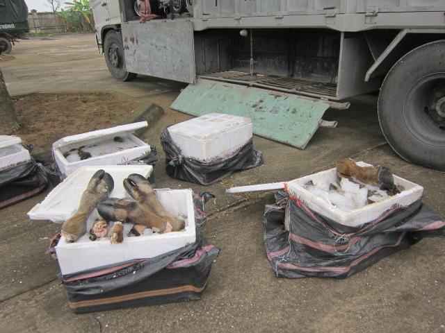 Bắt giữ xe ô tô vận chuyển gần 800kg chân trâu, bò bẩn