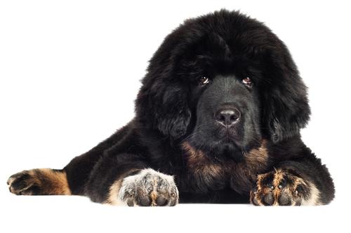 9 giống chó độc đáo mà bạn không thể bỏ qua