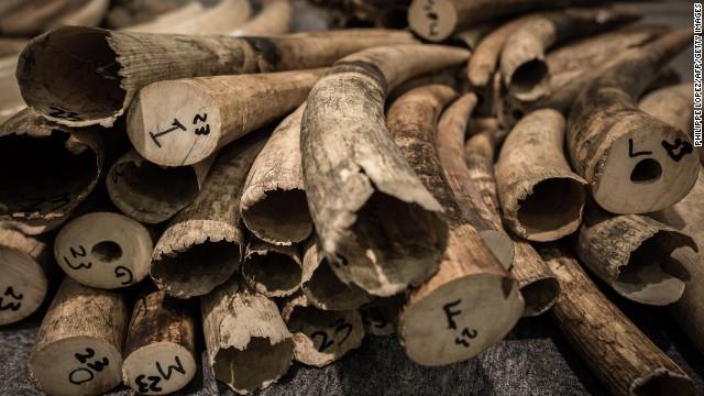 Hồng Kông tiêu hủy kho ngà voi lớn nhất thế giới