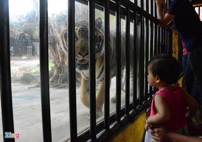 Vườn thú mở tiền tỷ trong khu du lịch của ông Dũng 'lò vôi'