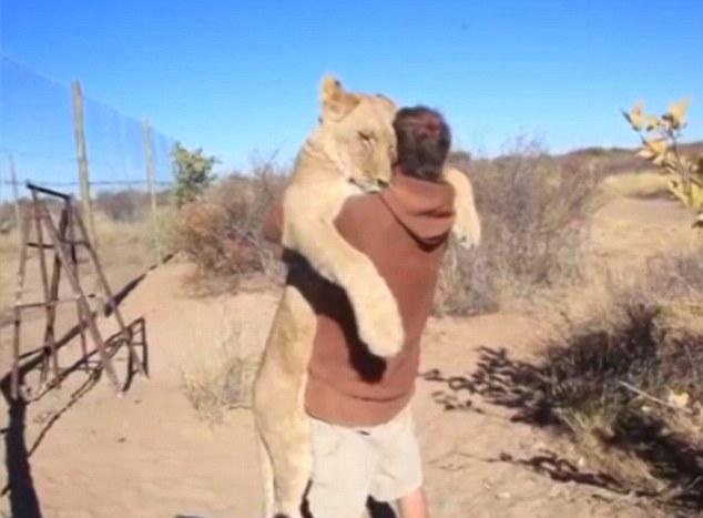 Video: Bất ngờ cảnh tượng sư tử lao tới ôm chặt người chăm sóc