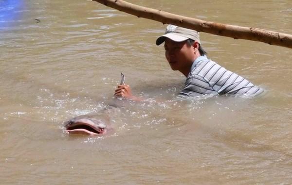 Liên tiếp bắt được cá khủng giá hàng chục triệu đồng
