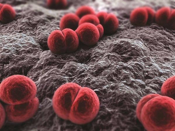 Tìm hiểu về viêm não mô cầu và vắc xin phòng bệnh