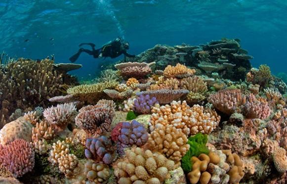 Nước biển nóng lên, hàng trăm ha rạn san hô Côn Đảo bị tẩy trắng - ảnh 1