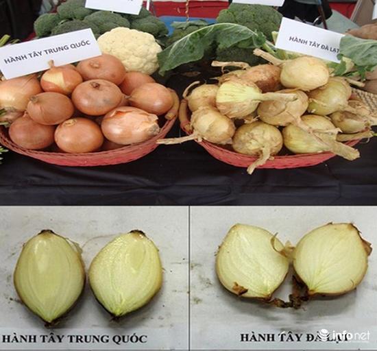 Tuyệt chiêu để phân biệt rau củ Trung Quốc và Việt Nam cho các bà nội trợ - ảnh 1