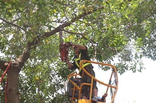 Hà Nội yêu cầu tổng rà soát cây xanh trong trường học - ảnh 1