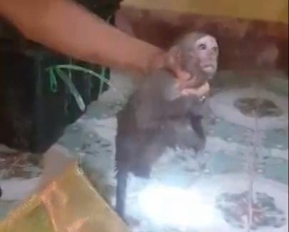 Bắt xe khách chở nhiều cá thể khỉ trái phép đi tiêu thụ - Ảnh 2