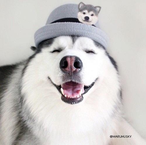 """Tan âu lo muộn phiền trước nụ cười """"tỏa nắng"""" của chú chó đáng yêu - ảnh 1"""