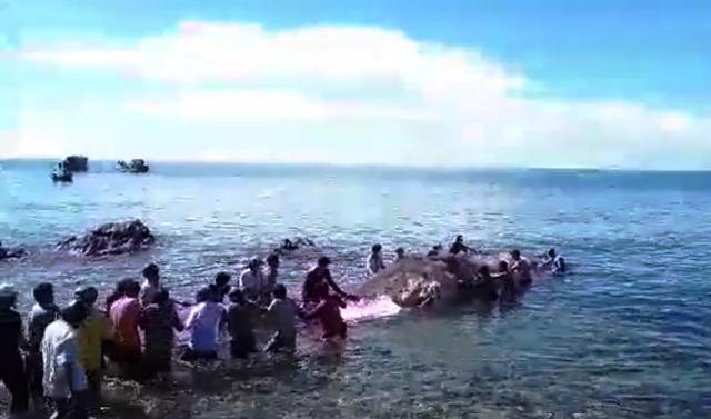 Phát hiện xác cá Ông dài hơn 13 m ngoài biển Nam Du - ảnh 1