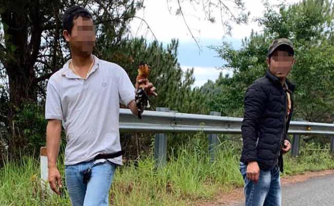 Bắn chết 2 con chim đầu rìu, người đàn ông bị phạt 10 triệu đồng - ảnh 1