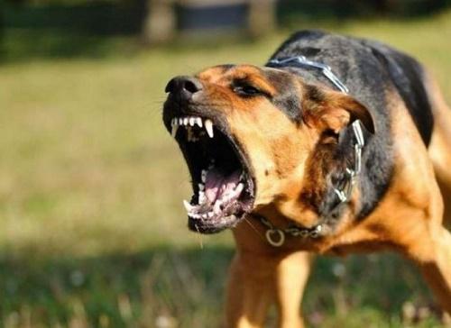 """Cách sơ cứu """"chuẩn"""" khi bị chó cắn để không mắc bệnh dại - Ảnh 1"""