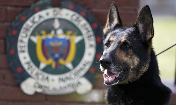 Băng đảng ma túy treo thưởng hơn 1,5 tỷ để truy giết một chú chó nghiệp vụ - ảnh 1