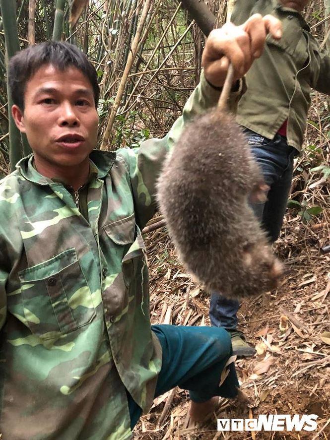 Kỳ thú chuyện săn lùng loài chuột khổng lồ trong rừng tây Yên Tử - Ảnh 2