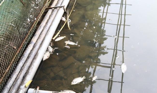 Vụ nước sạch ở Hà Nội nghi nhiễm dầu: Người dân có quyền đòi bồi thường thiệt hại? - ảnh 1