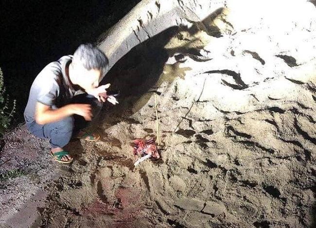 Hưng Yên: Cháu bé 7 tuổi bị đàn chó tấn công đã tử vong - Ảnh 1