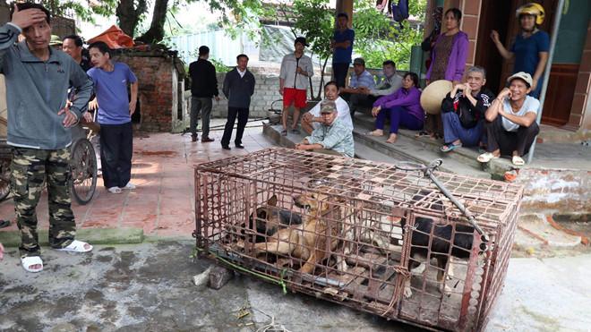 Vụ bé trai 7 tuổi bị đàn chó cắn tử vong ở Hưng Yên: VKSND phê chuẩn lệnh khởi tố bị can - ảnh 1