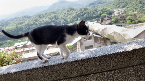 Khám phá Houtong: Ngôi làng mèo nổi tiếng bậc nhất ở Đài Loan  - Ảnh 1
