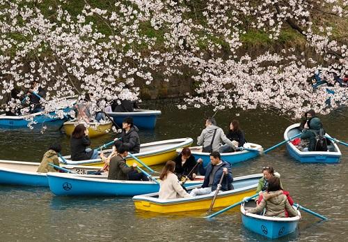 Những bức ảnh tuyệt đẹp về mùa hoa anh đào Nhật Bản 2019 - Ảnh 1