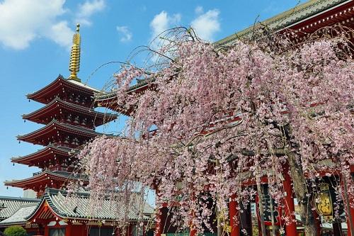 Những bức ảnh tuyệt đẹp về mùa hoa anh đào Nhật Bản 2019 - Ảnh 10