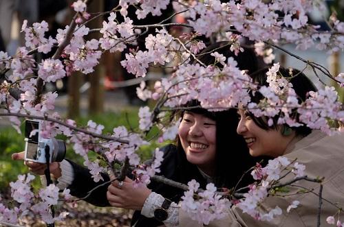 Những bức ảnh tuyệt đẹp về mùa hoa anh đào Nhật Bản 2019 - Ảnh 2
