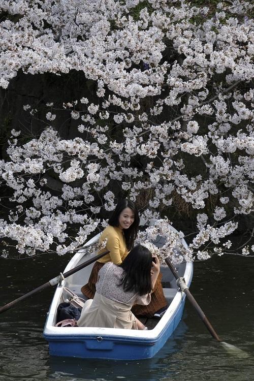 Những bức ảnh tuyệt đẹp về mùa hoa anh đào Nhật Bản 2019 - Ảnh 4