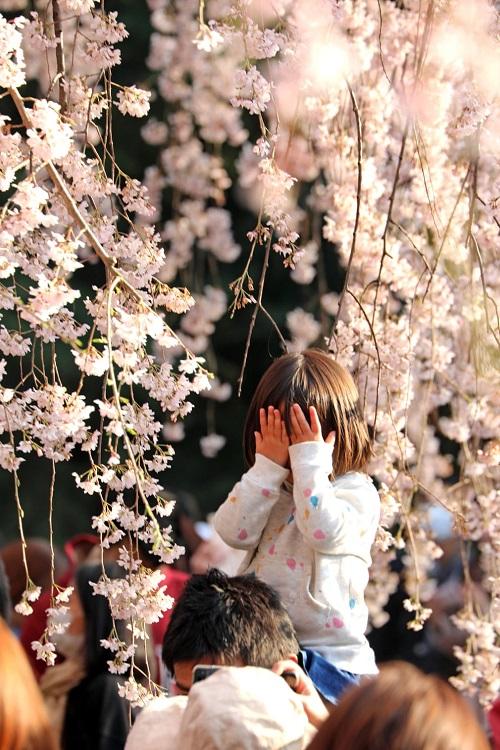 Những bức ảnh tuyệt đẹp về mùa hoa anh đào Nhật Bản 2019 - Ảnh 5
