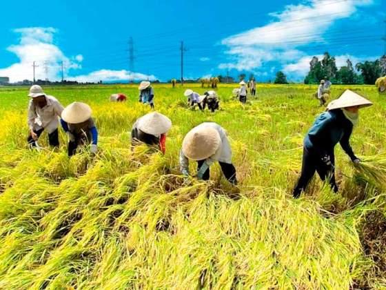 Nông dân đồng bằng sông Hồng với xây dựng HTX Nông nghiệp - ảnh 1