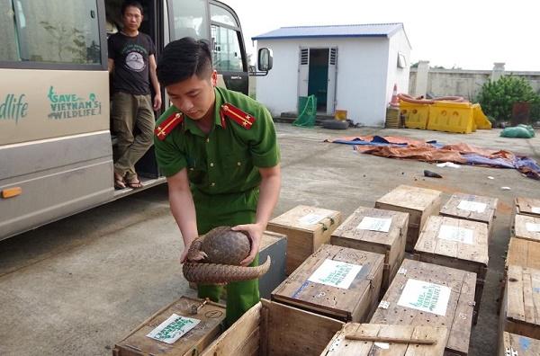Hà Tĩnh: Phát hiện, bắt giữ xe khách vận chuyển trái phép tê tê, rùa cùng hơn 4 tạ gỗ quý - Ảnh 2