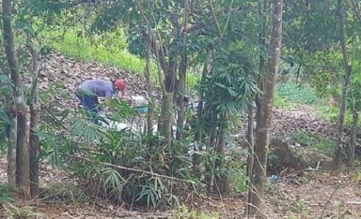 Tin tức thời sự mới nóng nhất hôm nay 28/11/2019: Phát hiện chi tiết lạ trong vụ thi thể không đầu tại vườn điều ở Bình Phước - ảnh 1