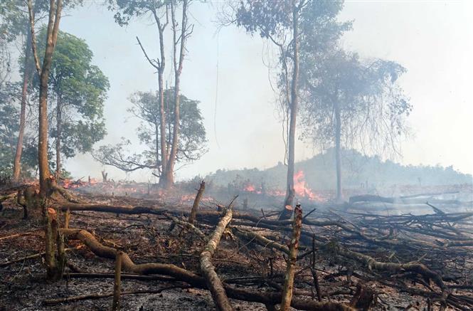 Nguy cơ cháy rừng cấp cực kỳ nguy hiểm ở 11 tỉnh - Ảnh 1
