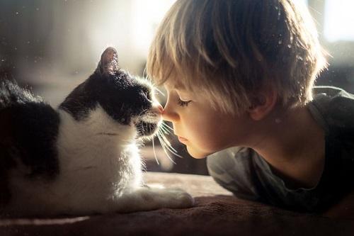 Nhà khoa học Nhật Bản tuyên bố virus SARS-CoV-2 có thể lây nhiễm từ mèo sang mèo - ảnh 1