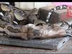 Video: Cận cảnh trăn dài 3 mét nôn trả 2 con mèo to