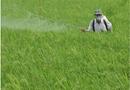 Sản phẩm - Dịch vụ - Ô nhiễm môi trường vì thuốc bảo vệ thực vật