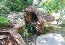Tin trong nước - Sẽ đóng cửa rừng Sơn Trà ở Đà Nẵng