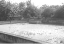 Tin trong nước - Đà Nẵng: Bị phạt hàng trăm triệu, lò mổ vẫn lén lút xả thải khiến dân kêu trời