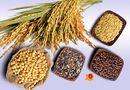 Sức khoẻ - Làm đẹp - Đang uống kháng sinh, cần kiêng ăn những loại thực phẩm nào?