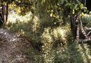 An ninh - Hình sự - Khởi tố vụ nam sinh sát hại bé gái 10 tuổi chấn động Vĩnh Long
