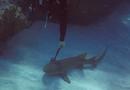 Cộng đồng mạng - Chú cá mập