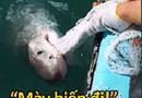 Cộng đồng mạng - Chết cười với màn đấu khẩu giữa ông lão đánh cá và con cá mập lầy lội