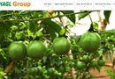 """Thị trường - Trái cây giúp Hoàng Anh Gia Lai đạt lợi nhuận """"khủng"""""""